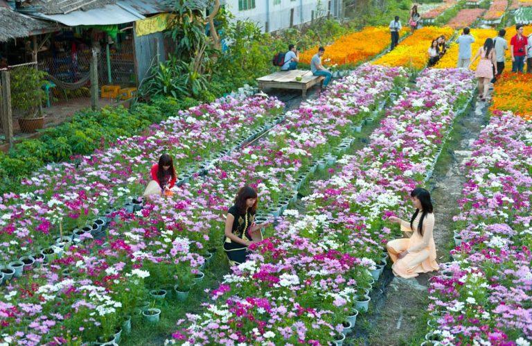Tour làng hoa Vạn Thành Đà Lạt