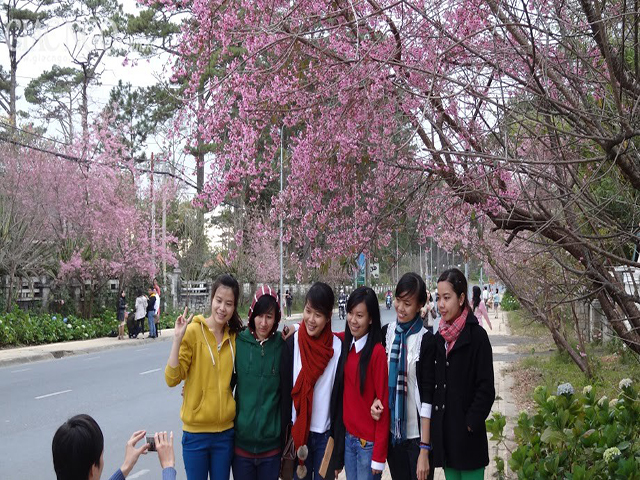 Tour công ty Hoa Dalat travel