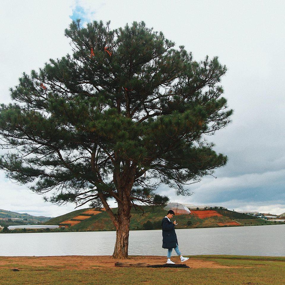 sống ảo ở cây thông cô đơn