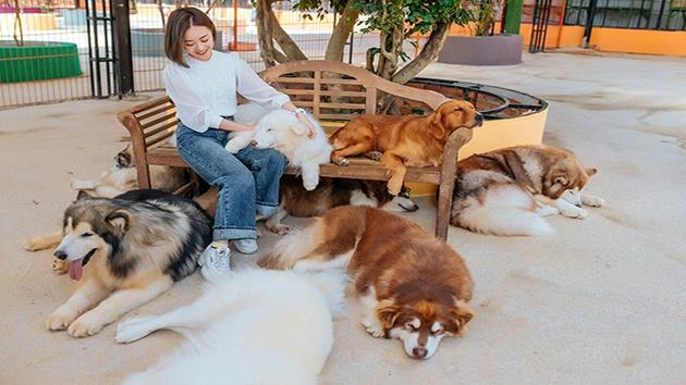 Trang trại cún Puppy Farm